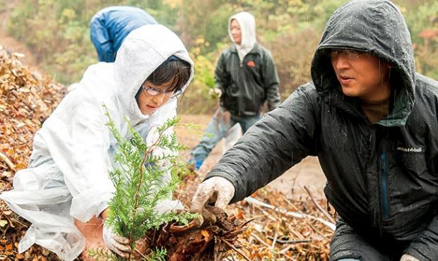 1本の木を植える活動が